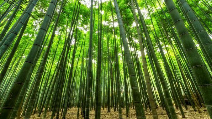 bambous bâton